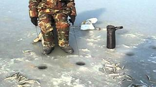 Smelt Ice Fishing2 - Russia, Vladivostok