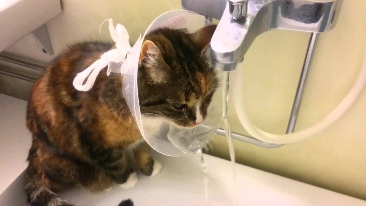 Kreatívan használja védőgallérját a cica - videó