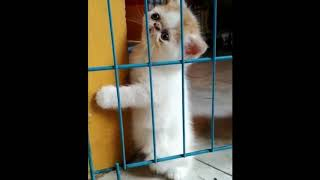 Funny and Cute Baby Cat Videos