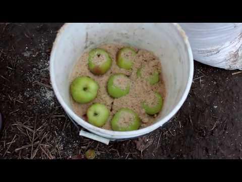 Как мы храним яблоки зимой