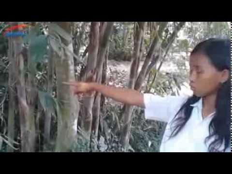 Bocah SD Tangkap 4 Tuyul, Ribuan Warga Prambanan Geger