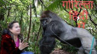 गोरिल्ला हिंदी में Gorilla in hindi