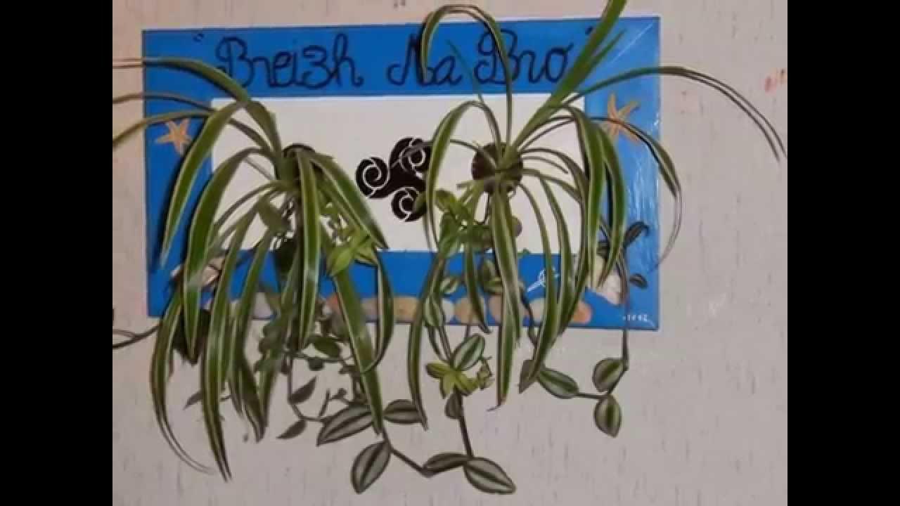 tableaux vegetaux breizh fr pour le decor des murs