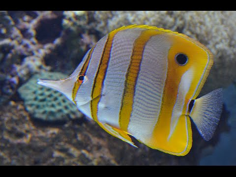 Marine Life Park | S.E.A Aquarium | Adventure Cove Waterpark | Singapore 2015