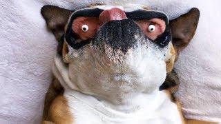 Vous allez rire jusqu'à ce que vous tombiez sur votre BUTT - FUNNIEST Animal Compilation