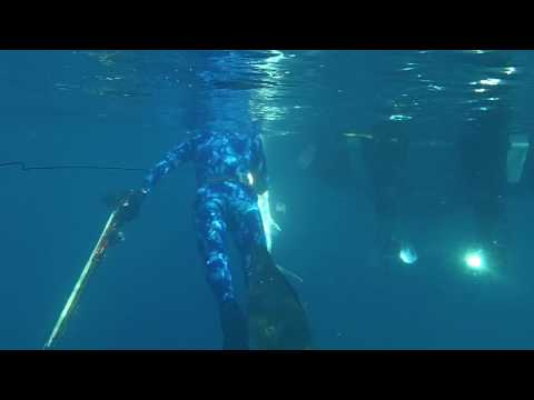 Stoned Amberjack in the Florida Keys Open Spearfishing Tournament