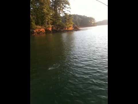 Lake Allatoona Hydrid Fishing with Crappie Man - July 29, 2012