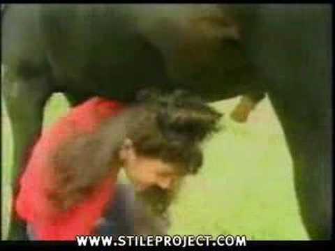 Caballos - Pasar por debajo de un caballo