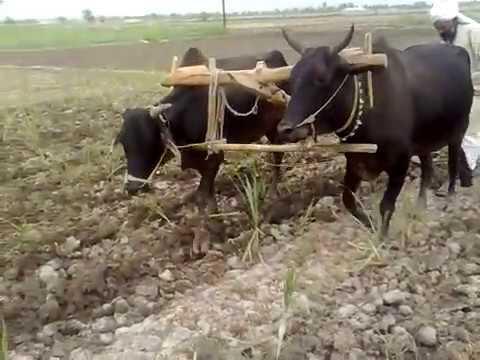 Alam Lohar - Punjabi Mahiya video