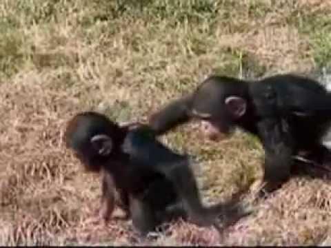 هزار القرود ,, هزار بوابين هههههههههه ضحك السنين