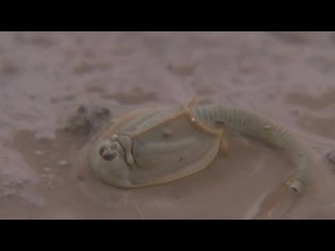 Living Fossil Discovered In China