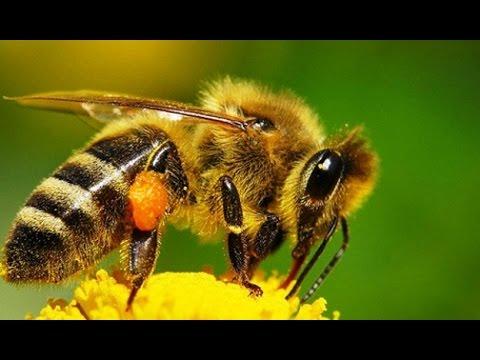 Войны насекомых (Документальные фильмы, передачи HD)