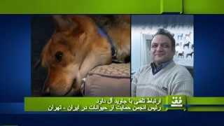 زندگی سگی در ایران
