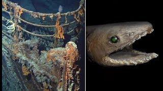 STRANGEST Things Found in the Ocean