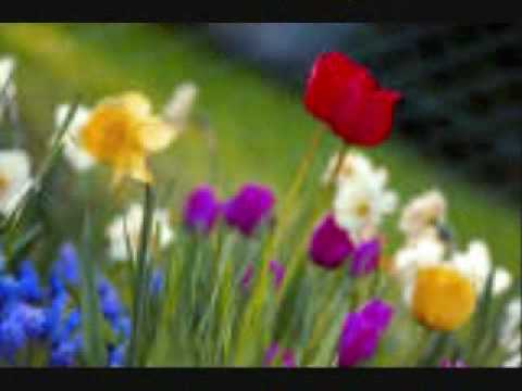 Sixpence None The Richer - Field Of Flowers