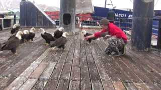 amazing eagles in dutch harbor