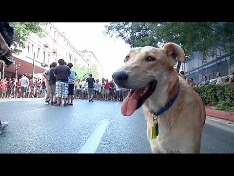 وفاة الكلب اليوناني الشهير لوكانيكوس