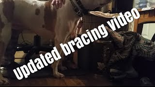 Service dog - updated bracing video - read description