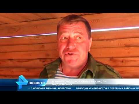 Мужчина из Нижегородской области стал мамой для медвежонка-сироты