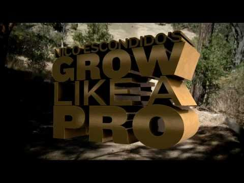 Grow Like a Pro with Nico Escondido - Field Report