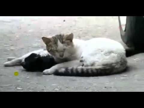 Самое грустное видео в мире о 2 котах ;(