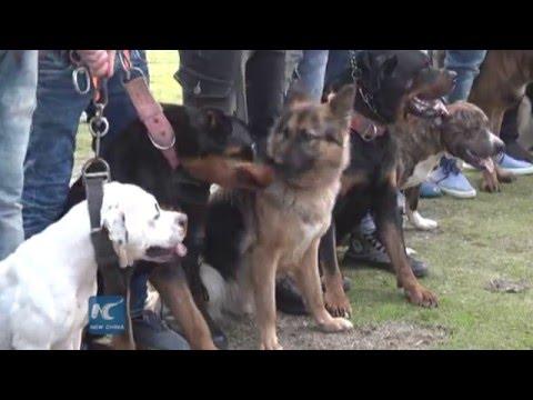 RAW:Hobbyists join dog festival in Gaza