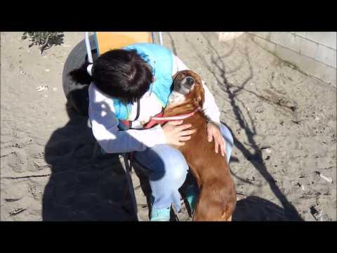 Animalinneed: Video of Moira
