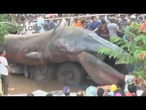 GIANT SEA MONSTER FOUND DEAD IN KHMER KROM CAMBODIA? NOVEMBER 21, 2013 (EXPLAINED) Music Videos