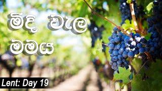 2020.03.14 - 19th of Lenten Season - I am the vine
