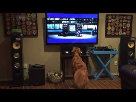 A este Golden Retriever le encanta ver tenis por la TV