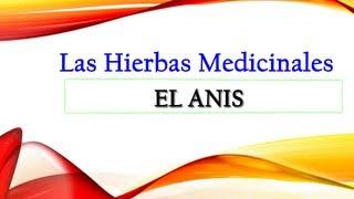 Anis Propiedades Medicinales - Anis Estrellado Propiedades Medicinales