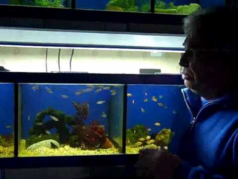 We Are Pets - How to Clean a Fish Tank