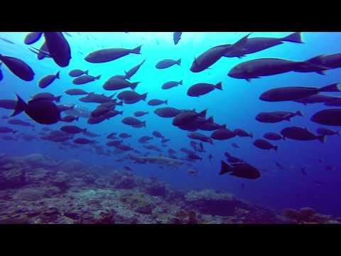 Diving In Komodo Hd Epic Liveaboard Aboard Mv Aurora