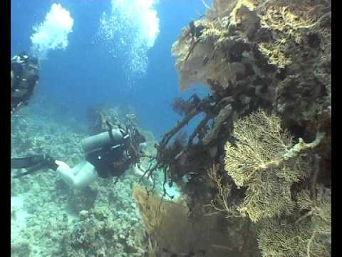 Diving In the Red Sea, Egypt, Sharm El Sheikh