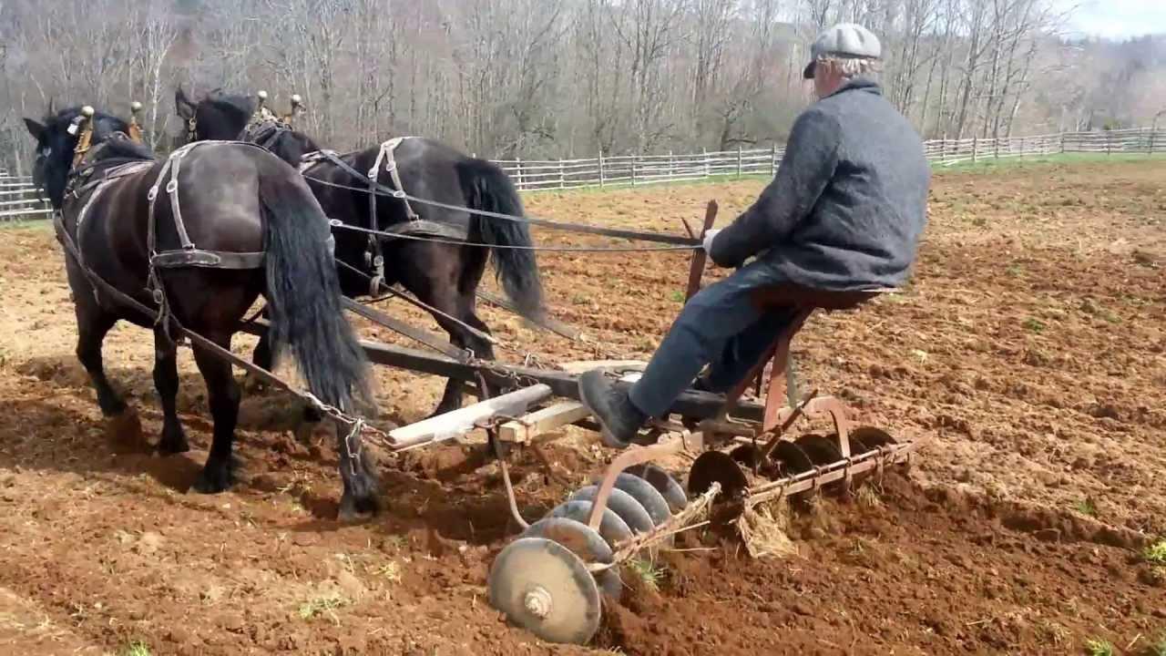 Canadian Horses Disc Harrowing At Ross Farm Youtube