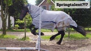 Thelly mag voor het eerst springen! Is hij een natuurtalent?!?