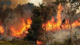 غابات الأمازون تحترق.. ماذا يحدث لرئة الأرض ؟