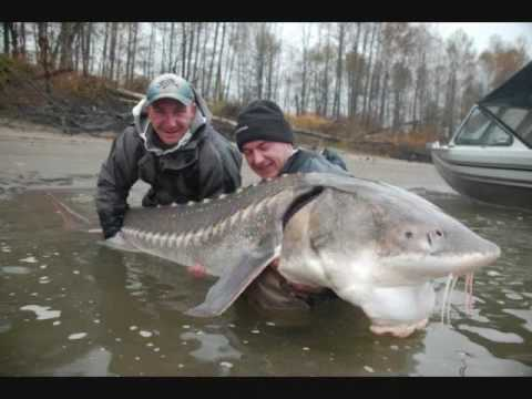 Monster fish of Canada