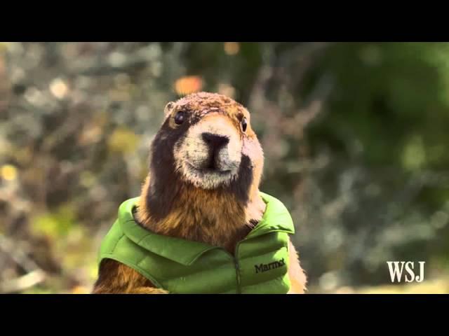 Super Bowl 50: Marmot Ad