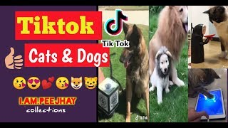 Tiktok Pets, Cute Cats and Dogs