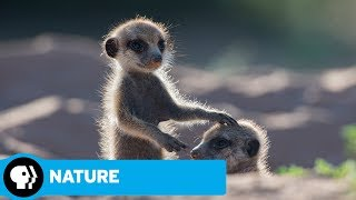 NATURE | Animals with Cameras, Episode 1: Official Trailer | PBS