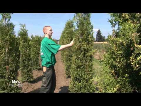 Grün Ist Leben - Baumschule
