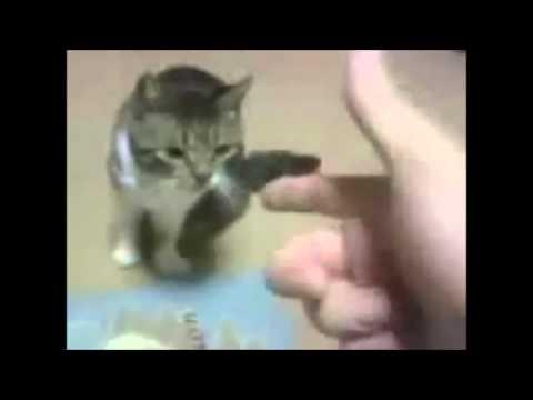 Animali che fanno finta di morire – HD Compilation