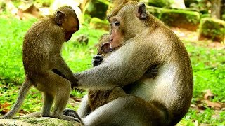 What king monkey doing? You will become king next day, Promise me ok