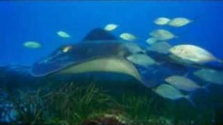Pod taflą oceanu 3D online cda chomikuj zalukaj bez limitów (zobacz opis)
