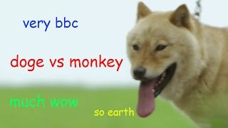 Doge Vs Monkey In Japan  - Wild Japan - BBC