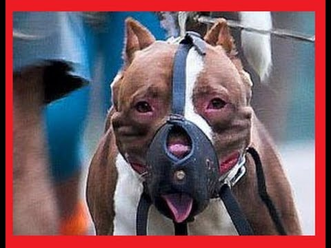 Dog Fight► The Real Top 10◄ Worldwide! video