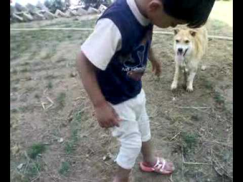 child fighting with dog, funny fight 1