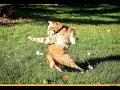 Подборка приколов с котами 5 минут хорошего настроения mp3