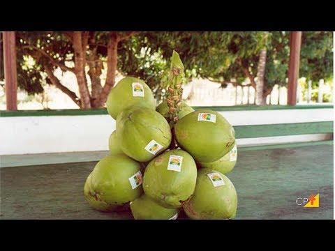 Curso a Distância Cultivo Orgânico de Coco